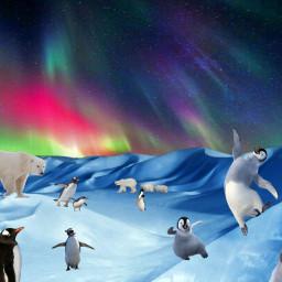 freetoedit antarctica penguins polarbears auroraborealis ircdesert