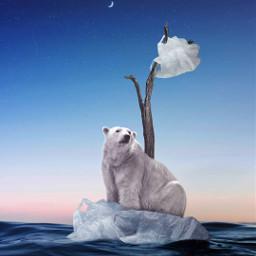 cambioclimatico savetheoceans noplastic savethearctic polarbear notfreetoedit