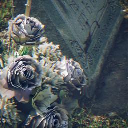 cemetery cemeterybeauty gravestone fadedflowers freetoedit