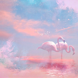 freetoedit pastel softcolors pink flamingo