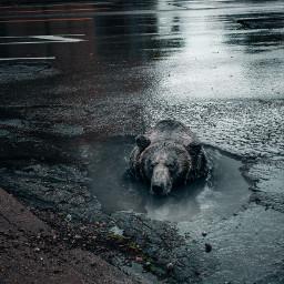freetoedit bear puddle street cars
