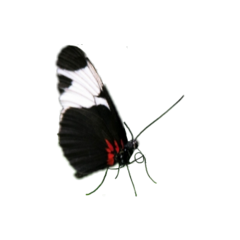 pianobutterfly butterfly byantonionogueiradealm! freetoedit byantonionogueiradealm