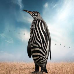 noedit pinguin zebra africa picsart