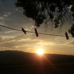 sunnyday sun tree beatiful beatifulday