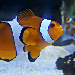 freetoedit fish aquarium ocean orange
