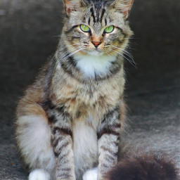 freetoedit remix cats whiskers felinebeauty