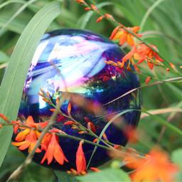nature colorful photography flowers inmyneighborhood freetoedit