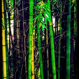 bamboo longorientation green
