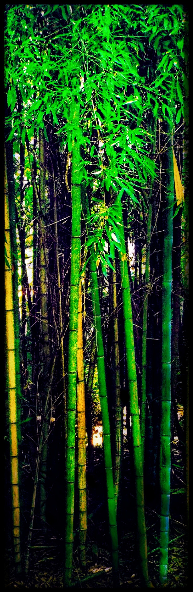 CLICK TO OPEN FULL IMAGE. #bamboo #longorientation #green