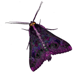 moth purple moths bugs butterfly freetoedit
