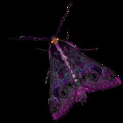moth purple moths bugs butterfly freetoedit