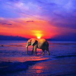 freetoedit bokeh summer beach love