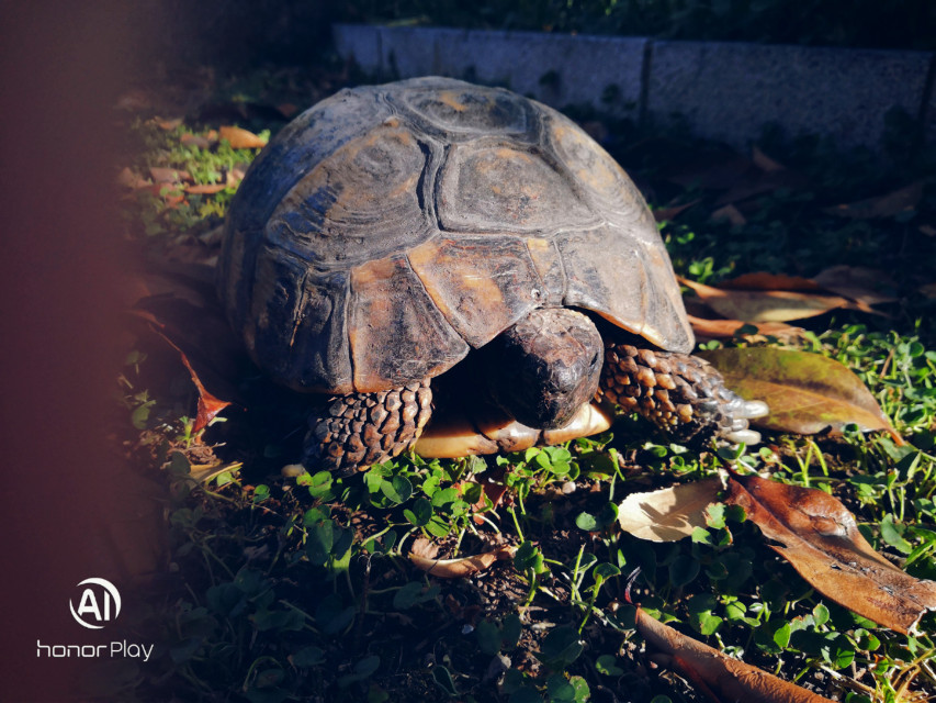 #черепаха #tartarugas