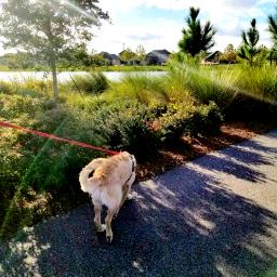 sidewalk dog animal pet petsandanimals freetoedit