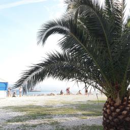 pcpalmtrees palmtrees