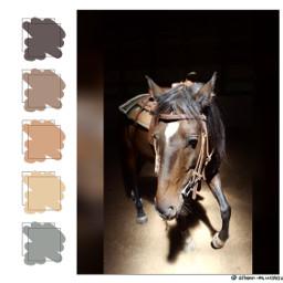 freetoedit horse pony western pallette ecpaletteshow