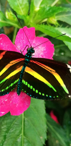 butterfly rainbow freetoedit colorpaint draw