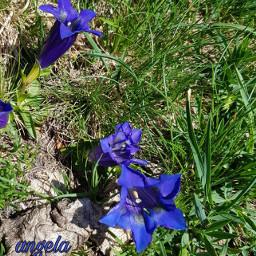 freetoedit muntain closeup nature flovers