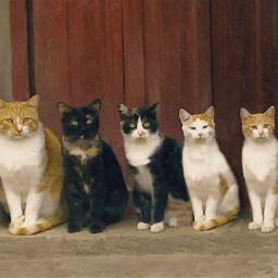 freetoedit cats family mininos felinos
