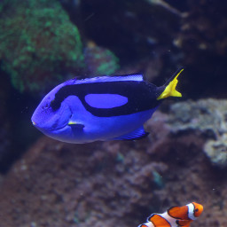 freetoedit colorful photography dory nemo