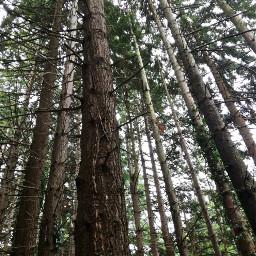 wood tree treelove walkinginthewoods naturesbeauty
