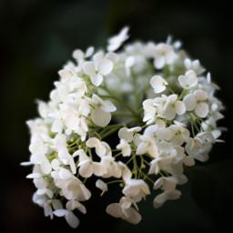 freetoedit nature macro white flower