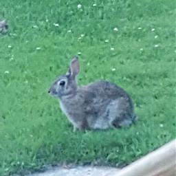 bunny rabbit cottage vacation freetoedit