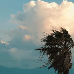 freetoedit photography palmtree clouds beautifulnature