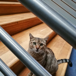 cat stairs confused railing justphotography