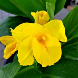freetoedit flower cute flowerphotography