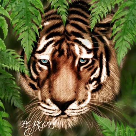 #dcjungles,#jungles