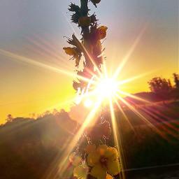 naturephotography sunset colourful pccolorfulsummer colorfulsummer