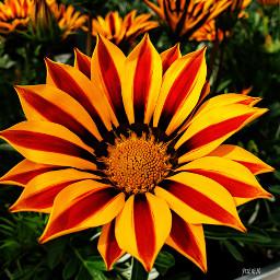 summer flower colourful love redandyellow