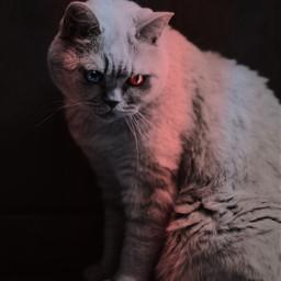 freetoedit cat eyes redeye blueeye