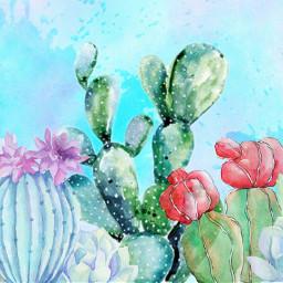 freetoedit kaktus aquarell ircwatercolor watercolor
