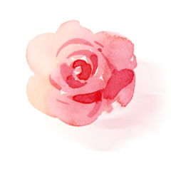 ftestickers watercolor flower rose shadoweffect freetoedit