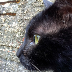 cat cute gato fofo pedra pcmadeofstone