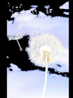 ftestickers watercolor flowers dandelions clouds freetoedit