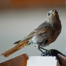 photography myphoto bird petsandanimals depthoffield freetoedit