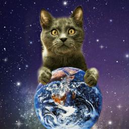 freetoedit cat catsofpicsart catlove love
