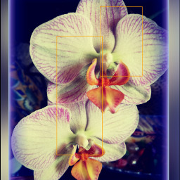 orchid orchidflower beautiful naturephotograpy naturesbeauty
