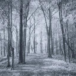 freetoedit forest trees wood bark