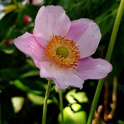 freetoedit interesting flower flowers naturlover
