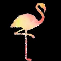 flamingo summertime pineapple glasses watermelon freetoedit