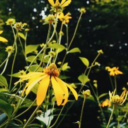 flowers wildflowers bokeh