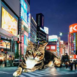freetoedit cats gatos city cidade