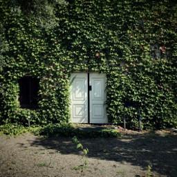 doorway doors ivy hidden hiddendoor