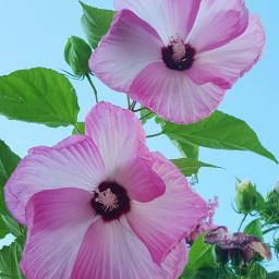 pink summer petals season flower