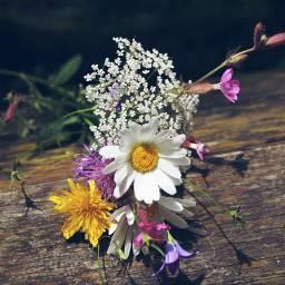 freetoedit nature wildflower flower myphotography