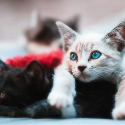 gatito.🐱🐈 dalemegusta freetoedit gatito